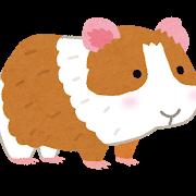 animal_marmot.png